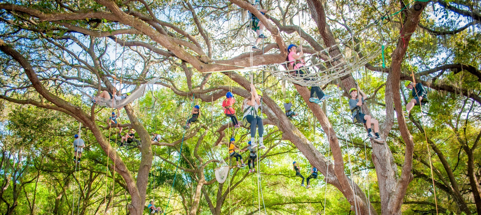 A group on an outdoor adventure during a technical tree climbing program