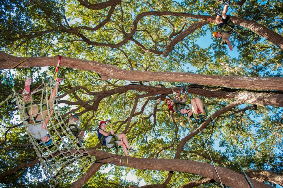Recreational Tree Climbing Adventure